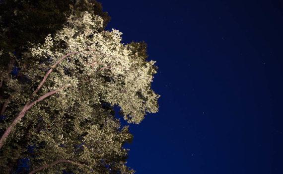 Träd, tävlingsbild
